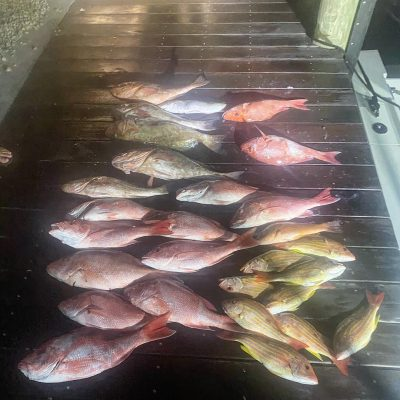 naples night time snapper fishing charter 3