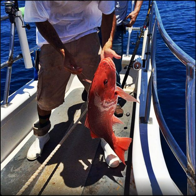 florida charter fishing
