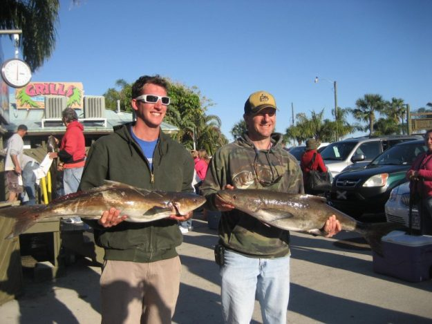 deep sea fishing cobia fish
