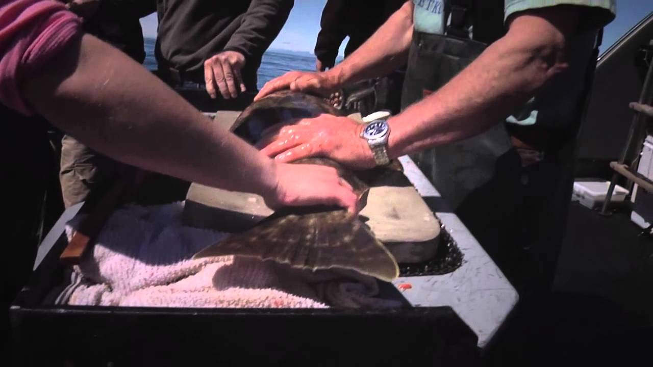 Every Halibut Counts
