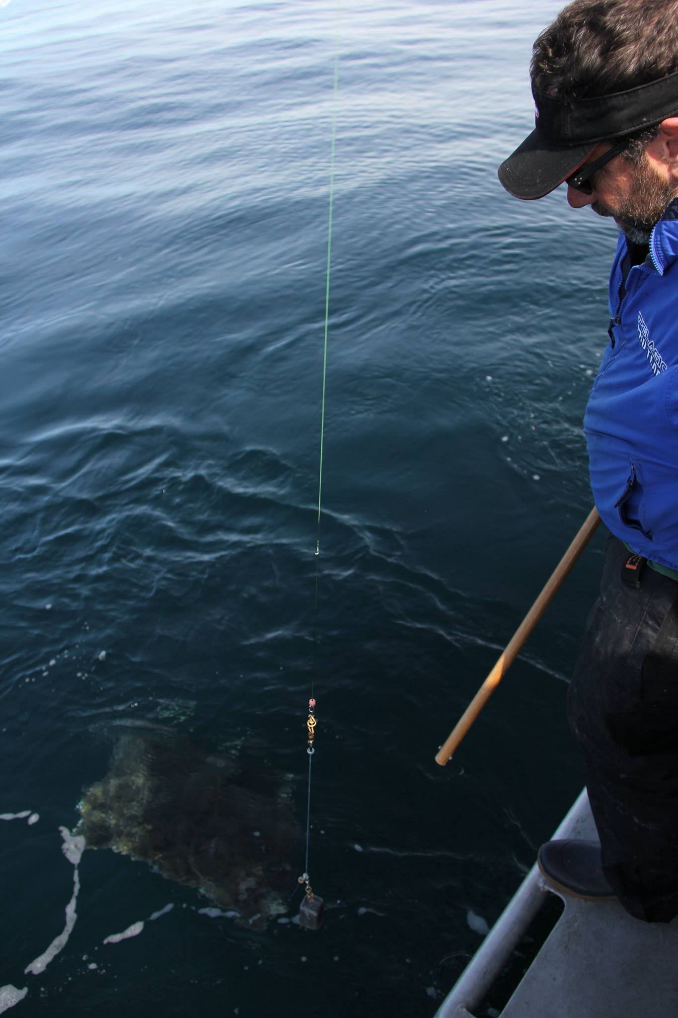 here is how we release the big ones without making them angr...